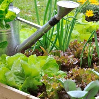 How to create a thriving veggie garden in tough times